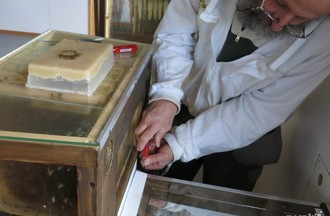 L'apiculteur Gilbert Dey ferme la ruche pour éviter que les abeilles ne s'échappent pendant le transfert.