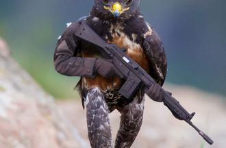 le faucon badasse