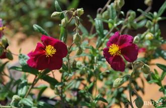 Journées des plantes Vaumarcus