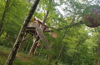 Weekend dans les arbres à l'étang du Verchat