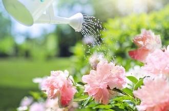 Arroser ses plantes et les aimer !