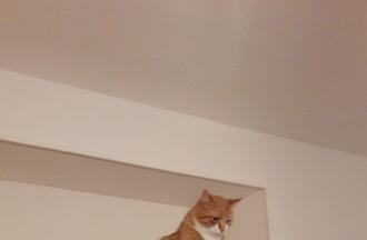 Le chat Doudou