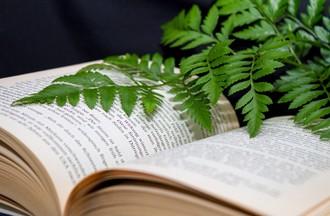 Tout savoir sur les plantes !