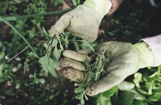 Les fameuses mains vertes!