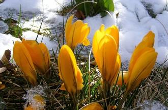 Certaines plantes aussi sont à protéger du froid