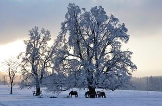 Des chevaux à l'entrée de Bellelay