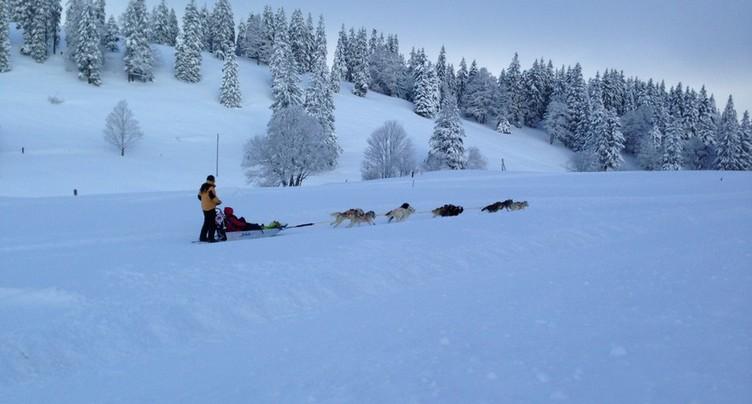 Des courses de chiens de traîneaux aux airs de Grand Nord