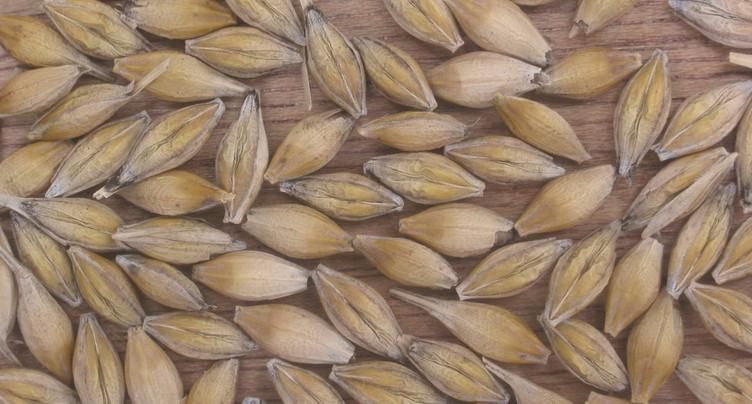 Les graines jurassiennes aux quatre coins du globe