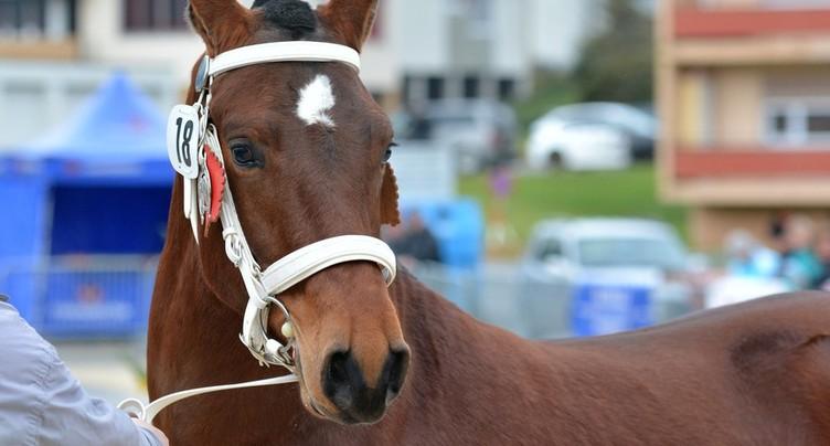 Une deuxième cuvée pour le cheval FM