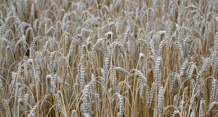 L'initiative de Neuchâtelois pour une Suisse sans pesticides a été déposée