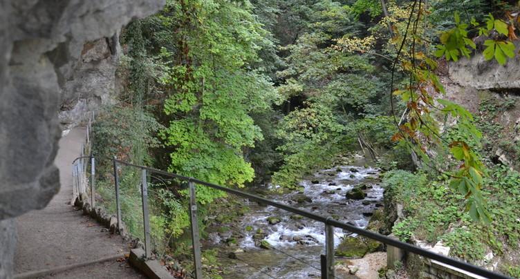 Chute d'arbres dans les gorges du Taubenloch