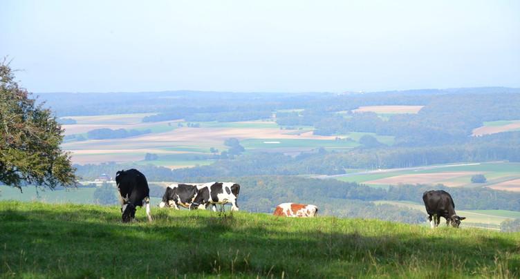 Trouver le bon repreneur pour le bon domaine agricole