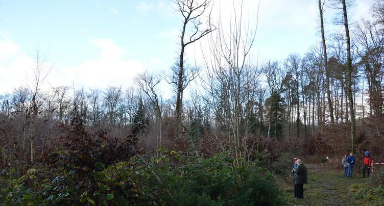 L'exploitation du bois en baisse