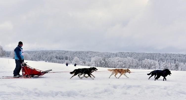 Les courses de chiens de traîneaux s'annoncent belles