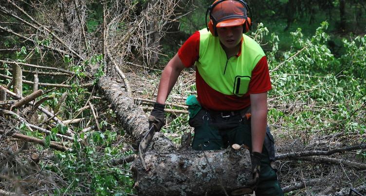 La récolte de bois a été bonne dans la région