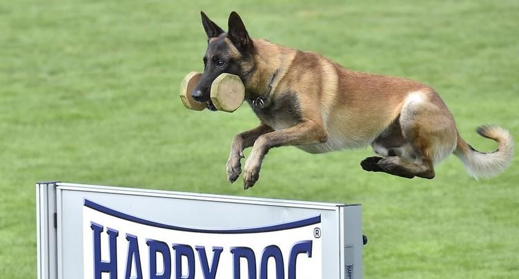 Les cours obligatoires pour les propriétaires de chiens tombent sur un os