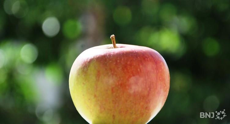 Les pommes ne courent pas les vergers