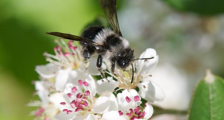 Mieux protéger les abeilles