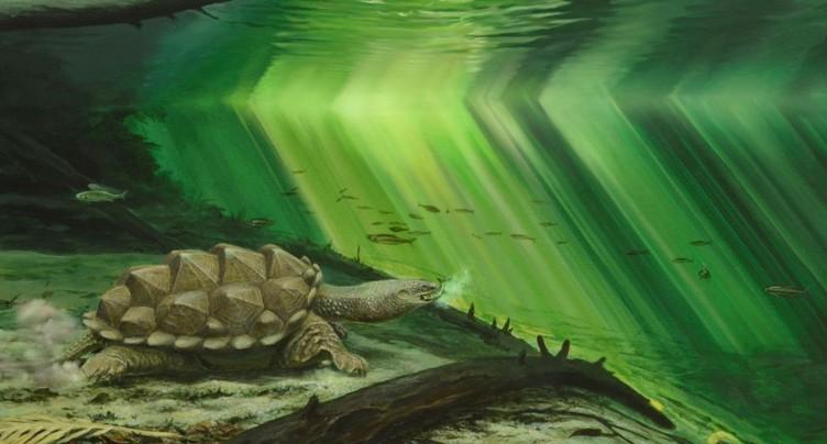Les tortues ont rentré leur tête pour mieux chasser sous l'eau
