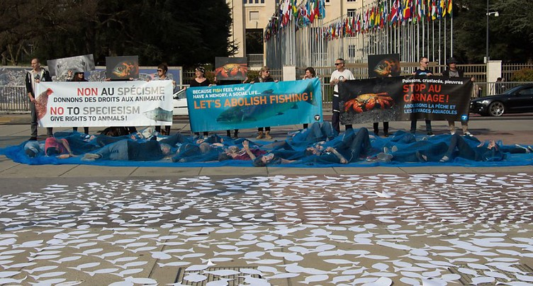 Une journée pour sensibiliser au carnage mondial des poissons