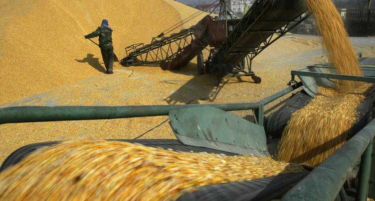 Obstacles en vue pour l'interdiction du maïs transgénique