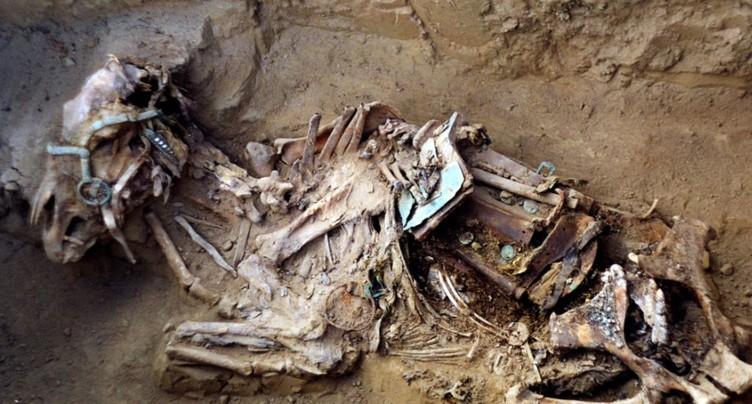 La sélection chevaline remonte à au moins 2500 ans