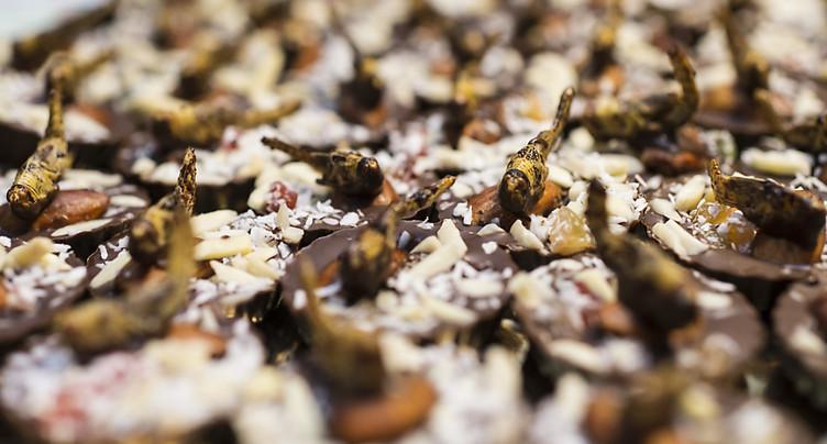 Insectes au menu dès le 1er mai: nutritionnistes dans l'expectative