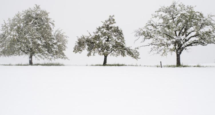 Le gel sévit à nouveau en Suisse dans la nuit de vendredi à samedi