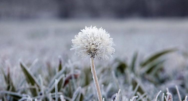 Les températures à nouveau sous zéro en plaine