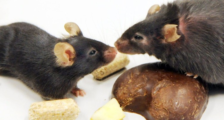 Pourquoi les souris flairent les microbes: une affaire d'évolution