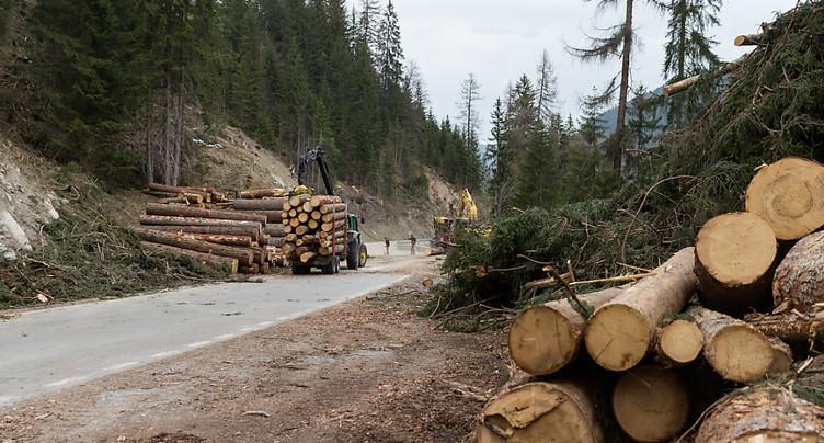 La récolte du bois est au plus bas depuis dix ans