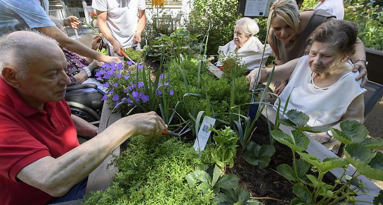Fraises, terre et herbettes pour les résidents d'un EMS genevois