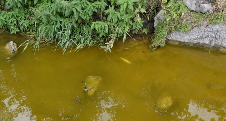 Plusieurs milliers de poissons morts dans un ruisseau à Ruswil