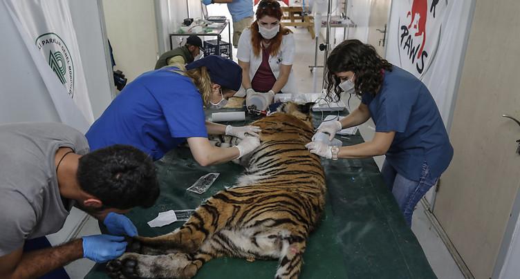 Des animaux d'un zoo d'Alep évacués en Turquie