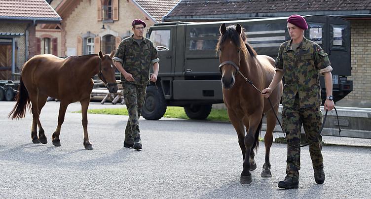 Soupçons d'angine du cheval au Centre vétérinaire de l'armée