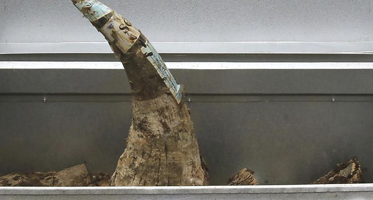 Première vente aux enchères en ligne de cornes de rhinocéros
