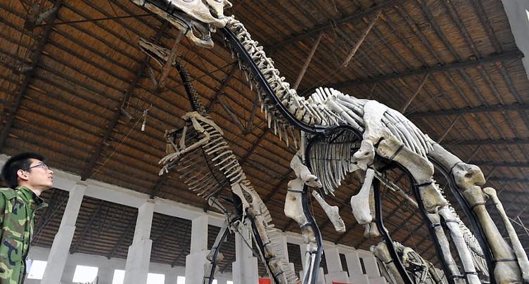Des crustacés au menu de certains dinosaures du crétacé