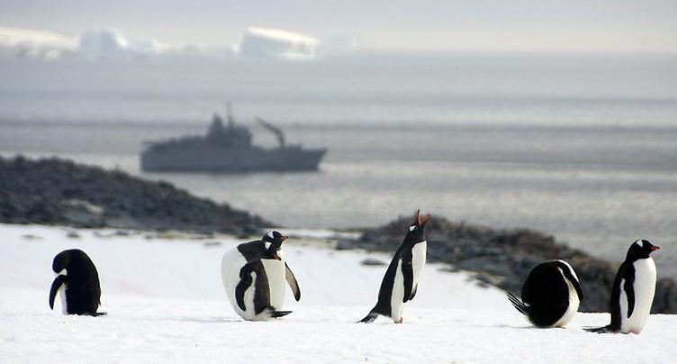 Nouvelles négociations pour un sanctuaire marin en Antarctique
