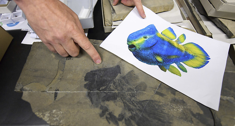 Découverte aux Grisons de fossiles d'un coelacanthe bizarre