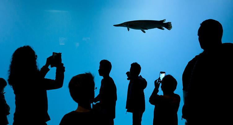 Plongée en eau douce avec Aquatis à Lausanne