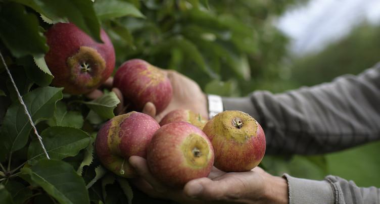 La politique agricole 2022 est inutilisable selon les paysans