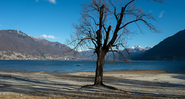Les algues bleues des lacs suisses tendent à disparaître