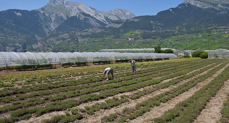 Le Valais investit dans la recherche agronomique