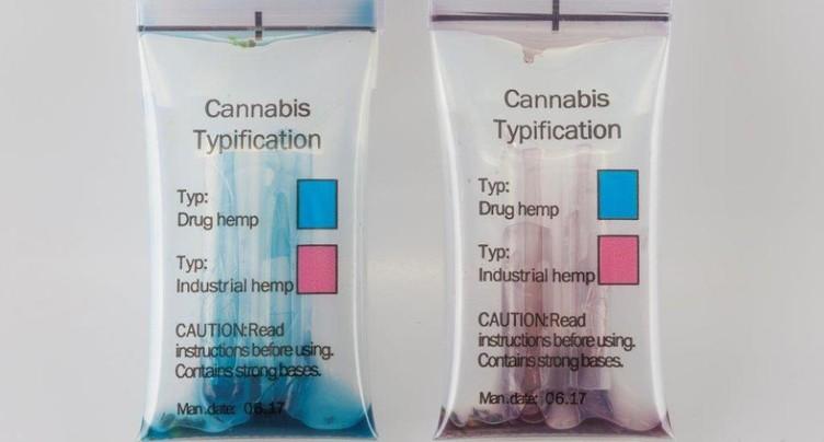 Essais concluants pour un test rapide du cannabis à Zurich