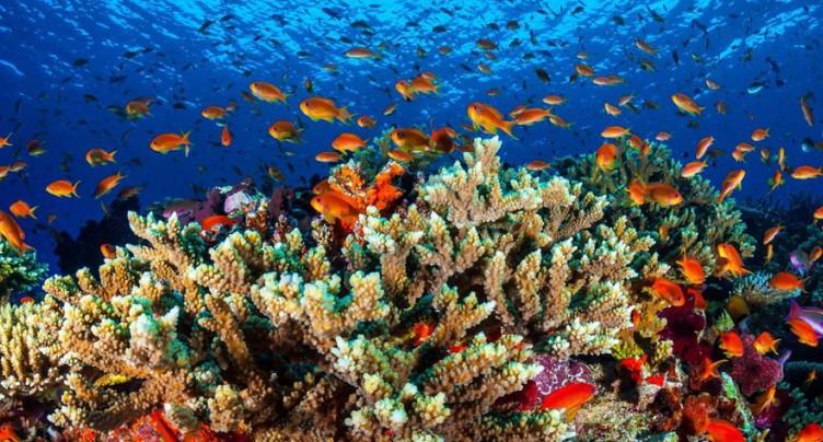 Le défi de l'Australie aux chercheurs: sauver la Grande Barrière