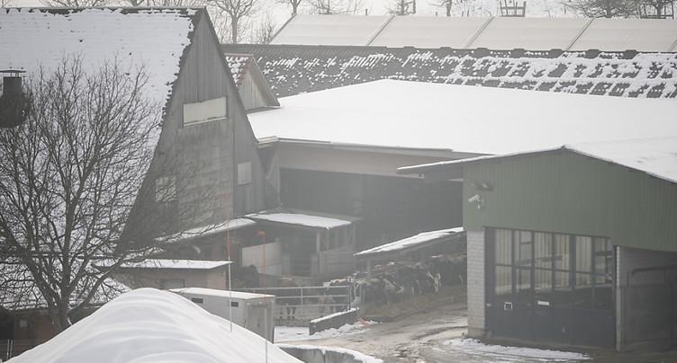 Bovins saisis dans des fermes lucernoises euthanasiés ou abattus