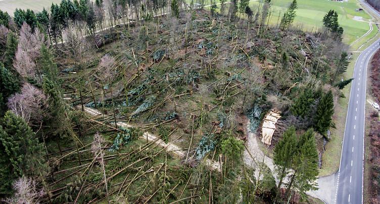 Environ 1,3 million de m3 de bois ont été couchés par Burglind