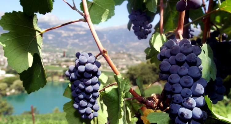 Fraudes supposées dans le commerce des vins AOC valaisans