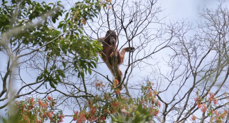 Indonésie: violents feux de forêts à Sumatra et Bornéo