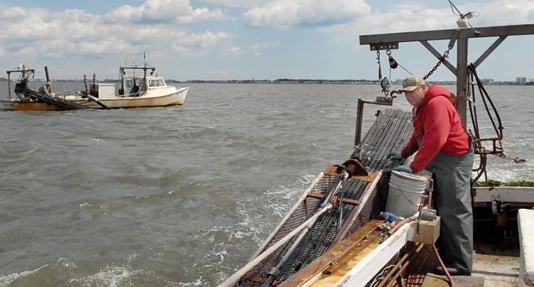 Océans: 55% de leur surface exploitée par les grands chalutiers